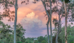 Thor's Hammer (Jan van_Dijk) Tags: sunset sky nature clouds zonsondergang bomen wolken thunderstorm redcliffe thor scape gumtree donder moretonbay spottedgum