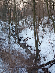 Valley Place Ravine (Dendroica cerulea) Tags: trees winter snow creek newjersey stream nj ravine brook highlandpark fav10 middlesexcounty ayresbeach redsmarina valleyplaceravine
