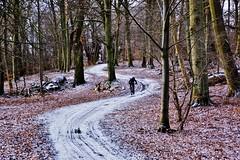 The long and winding road (osto) Tags: denmark europa europe sony zealand scandinavia danmark slt a77 sjlland osto alpha77 osto february2016