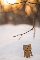 Danbo and winter (PersonaGratas (Bashira)) Tags: danbo danboard