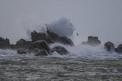 Porspoder / The Tempest Imogen aka Rozika (mhyrdin) Tags: bretagne vagues tempte finistre porspoder