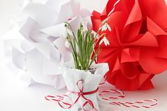 Mărţişor și Ghiocei (ronatka) Tags: ghiocel martisor kusudama modularorigami nataliaromanenko white red whitebackground ef50mmf18stm rectangle rectangle12 flower flowersorigami mărţişor мэрцишор