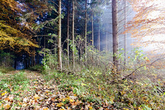 IMG_2400-Bearbeitet.jpg (MSPhotography-Art) Tags: morning autumn nature misty germany de landscape deutschland nebel outdoor herbst natur wolken alb landschaft wandern wanderung badenwrttemberg burghohenzollern albstadt albtrauf schwbschealb