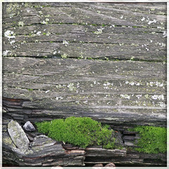mossy wood (PIKTORIO) Tags: wood detail berlin green nature rotting beauty germany moss decay growth vegetation gaps graound piktorio