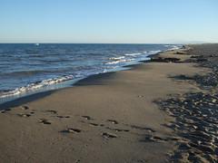 La plage de la Grande Cosse (cristoflenoir) Tags: beach grande naturism languedoc mditerrane naturisme cosse