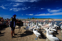 LR-160316-028.jpg (Finert) Tags: theentrance friendlyflickr pelicanfeeding 160316