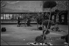 musee_dentelle_calais07 (Les photos de Laurent) Tags: street france building museum architecture calle arquitectura nikon lace walk edificio north muse promenade caminar museo 1855mm rue dentelle calais laurent nord norte batiment pasdecalais encaje d3200 gaudinfazio