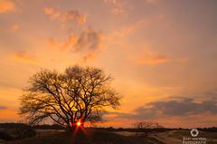 End of my world (Marc.van.Veen) Tags: sky sun tree nature netherlands sunshine clouds sand pentax outdoor dusk nopeople endless k50 marcvanveen