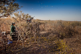 Argentina Luxury Dove Hunting 2
