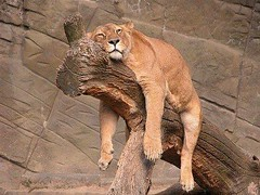 Time to take a rest for this #animals (PhotographyPLUS) Tags: pictures graphics photos illustrations images stockphotos articles footage stockimage freephoto stockphotograph