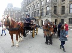 Paardenkoets003 (Quetzalcoatl002) Tags: horse amsterdam coach dam horsedrawn damsquare paardenkoets koetsjes