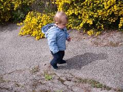 Ballade dans le jardin (Dahrth) Tags: baby garden lumix raw jardin littleboy bb yellowflowers gf1 petitgaron micro43 panasoniclumixgf1 20mmpancake gf120 microquatretiers