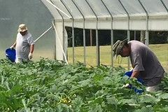 A crew from the Mississippi Band of Choctaw Indians taking care of crops inside a high tunnel (USDAgov) Tags: stem women tribal tribes highfive veterans urbanfarming nifa knowyourfood knowyourfarmer kyf2