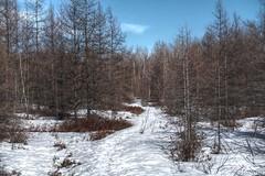160413-11 Trail (clamato39) Tags: trees snow canada nature trail qubec neige arbre villedequbec basepleinairdestefoy