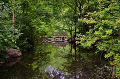 Central Park-North Woods, 05.16.15 (gigi_nyc) Tags: nyc newyorkcity spring centralpark northwoods springincentralpark