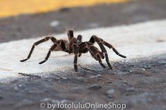 Argentinien_Insekten-54 (fotolulu2012) Tags: tierfoto