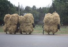 Ethiopia (stevefenech) Tags: africa hilarious desert steve donkey stephen east hauling hay ethiopia addis burden bails beasts fenech ababa fennock