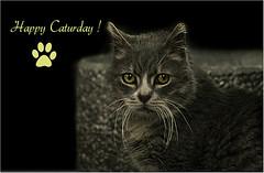Happy Caturday ! (Simply Viola) Tags: cats pets animal felini felines gatti animali