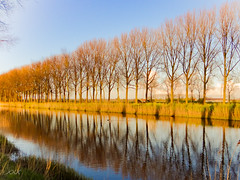 Where gold speaks, every tongue is silent ... (babs van beieren) Tags: trees sunlight water reflections landscape evening outdoor brugge vaart damme