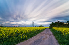 DSC_3259 (The Real Luke Skywalker) Tags: road flowers sunset italy motion field grass yellow clouds landscape nikon long exposure italia feld wolken tokina dirt bewegung landschaft lombardia untergang torrazza 1116mm d3100
