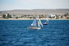Just wind down (Daniel.Lgnes) Tags: ocean blue sea patagonia mer tourism southamerica water mar tour turismo sudamerica velero puertomadryn sailingboat ocanoatlntico southatlanticocean gosailing