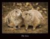 (Charles Connor) Tags: nature animals prairiedogs canoneos zoos naturephotography animalcloseups lagoszoo shieldofexcellence canon100400lens canon760d