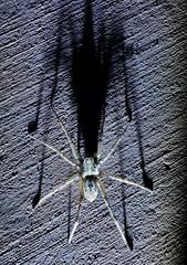 20160420_195120 (JRmanNn) Tags: spider duckcreek