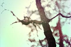 blur-dreamy-texture-texturepalace-41 (texturepalace) Tags: blur color leaves cc creativecommons dreamtextures texturepalace blurtextures