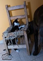 DSC_0100 (Bela Putriche Fotografia) Tags: family dog love co animal familia cat de amor interior gato cachorro cachorros bichos animais filhos filhote babycat cani estimao adoo adote nocompreadote