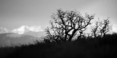 Delayed Spring (memories-in-motion) Tags: schnee white snow black tree canon landscape photography eos mono spring delay sigma sw schwarzweiss ste landschaft baum frhling brances spter 600mm canoneos5dmarkiii 150600mmf563dgoshsm
