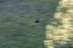 Come fly with me ... (mona_dee) Tags: bird nature birds animal animals wings wing