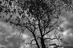 ** (donvucl) Tags: trees sky blackandwhite bw london clouds donvucl fujix100s