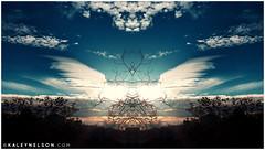 Your Wings Will Regrow (kaleynelson) Tags: trees abstract tree nature landscape meditate symmetry mirrored symmetric symmetrical meditation psychedelic spiritual chakra chakras alexgrey sacredgeometry kaleynelson