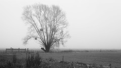 Tree in the Mist - Beaune (Remy Carteret) Tags: trees blackandwhite bw mist france tree field canon eos blackwhite haze noiretblanc champs nb arbres fields mk2 5d canon5d arbre champ brume beaune mkii markii nargis mark2 21200 challanges canoneos5dmarkii 5dmarkii canon5dmark2 5dmark2 canon5dmarkii canoneos5dmark2 21200beaune remycarteret rmycarteret