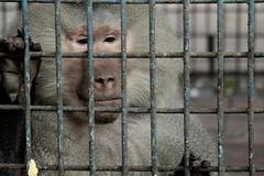 Prison Life - XIII (Rafee Mizan Khan Chowdhury Niloy) Tags: trees people sun green nature canon garden botanical zoo wildlife photowalk monkeys dhaka mirpur 70d