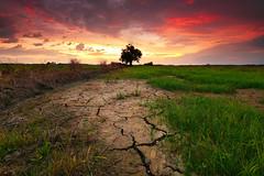 The Drought Land (fiz_zero) Tags: sunset wallpaper sky sun tree nature sunrise landscape nikon colorful outdoor dusk background explore malaysia land filters perak telukintan singhray nikon1635mmf4vr nikond750