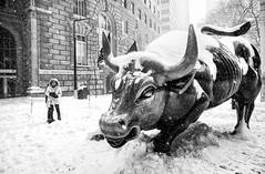 Winter Storm Jonas 15 (mkc609) Tags: street nyc newyorkcity urban blackandwhite bw snow newyork blackwhite candid streetphotography bull wallstreet wallstreetbull winterstormultima