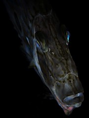 P1050816 (Jeannot Kuenzel) Tags: leica macro water port photography underwater under scuba diving olympus malta zen supermacro asph f28 45mm underwaterworld s2000 dg 240z underwaterphotography ois jeannot inon macroelmarit underwatercreature kuenzel z240 maltaunderwater underwatermacro underwateralien supermacrophotography ucl165 wwwjk4unet jk4u epl5 maltaunderwatermacro maltaunderwaterphotography bestmaltaunderwaterpictures maltamacro maltascubadiving underwatersupermacro jeannotkuenzel