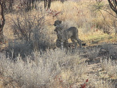 Africa 2015 079 (Absolute Africa 17/09/2015 Overlanding Tour) Tags: africa2015