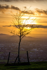 Tree Overlooking Cheltenham - Cleeve Hill, Gloucestershire. (Jeremiah Huxley Productions) Tags: england gloucestershire cheltenham cleevehill