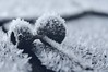 'Sell me a coat 'cause I feel cold'(Bowie) (Bilderwense) Tags: schnee snow macro ice germany deutschland 50mm nikon europa europe dof bokeh depthoffield nikkor makro eis icecrystals shallowdepthoffield shallowdof 50mmf18 northerngermany nikkor50mm eiskristalle smoothbokeh bokehlicious softbokeh d5000 bokehrama macrodreams