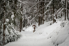 snowy way (s.knellesen) Tags: schnee winter snow germany deutschland schwarzwald blackforrest badherrenalb knellesen