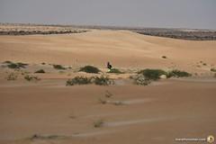 3-Oman-Desert-Marathon-Day-6_7208