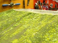 Fietsflora-1 (@WorkCycles) Tags: plant green dutch amsterdam moss flora outdoor mold canopy bakfiets bakfietsen workcycles boxbike babboe