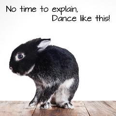 Dancing Bunny (Jeric Santiago) Tags: pet rabbit bunny animal dance conejo lapin hase kaninchen   notimetoexplain rabbitbit