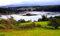 Menai Suspension Bridge (Mahmoud R Maheri) Tags: uk wales river thomastelford nineteenthcentury anglesey oldbridge menaibridge menaisuspensionbridge castironbridge fieldssky menaicrossing
