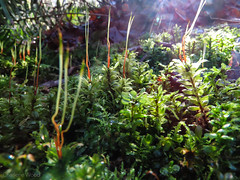 Cliff_Park-6 (C Wood) Tags: family creek bc britishcolumbia mapleridge kanaka cliffpark