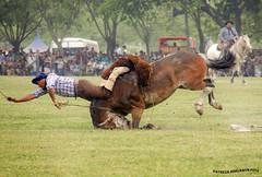 Jineteada 3_2 (pniselba) Tags: horse criollo caballo buenosaires gaucho tradicion provinciadebuenosaires sanantoniodeareco areco jineteada diadelatradicion