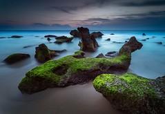 Rocas de Roche 1 (Orion Azul) Tags: musgo sol de atardecer sony playa andalucia cielo gran puesta angular litoral hitech a7 roche conil larga orilla crepsculo exposicin filtro verdin degradado 14mm samyang