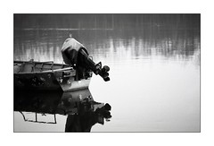 "2016 FSU project, 6^ week ;/)  15 TEE ""the Mussel"" (schyter) Tags: camera bw slr film 35mm silver lens monocromo aperture foto kodak bokeh tmax board fiume cell 15 11 bn homemade e soviet automatic di po una campo epson cds 100 v600 135 jupiter mussel 1977 minimalismo kiev chemicals tee lightmeter bianco arsenal development nero bianconero analogica automat weighing 125 1125 lodi analogic bordo blackwithe pellicola allaperto lodigiano profondit adox adonal 4135  zavod gerrone casellelandi 15 homemadescanned sn7705901 sn790843 90gost"